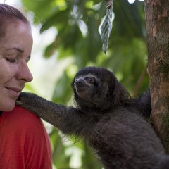 Caretaker and three-toed sloth